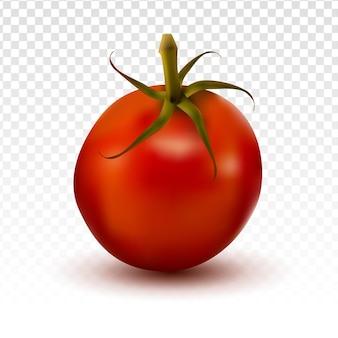 투명 배경으로 현실적인 토마토