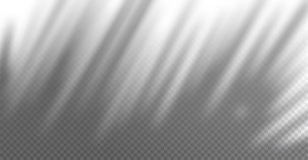 Реалистичная прозрачная тень на стене экзотической пальмовой ветки