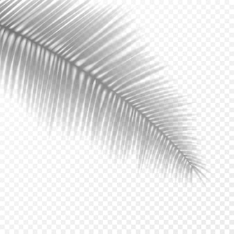 Realistic transparent palm leaf shadow