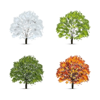 Realistic tree season set with isolated images of trees with green and yellow leaves with snow