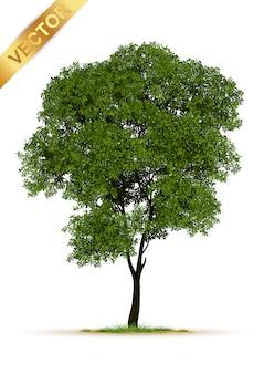 고립 된 현실적인 나무