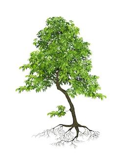 Реалистичные деревья на белом фоне