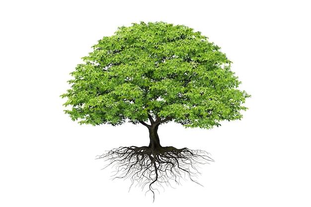 白い背景の上の現実的な木