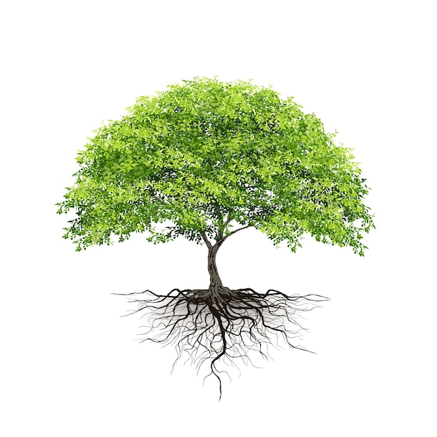 Realistic trees on white background
