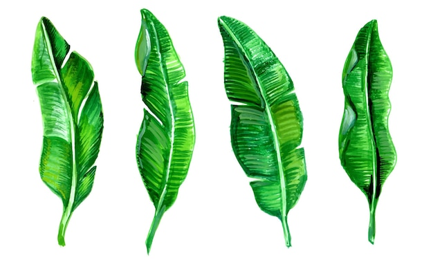 Realistic tropical leaf collection watercolor