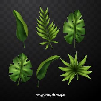 현실적인 열 대 잎 컬렉션