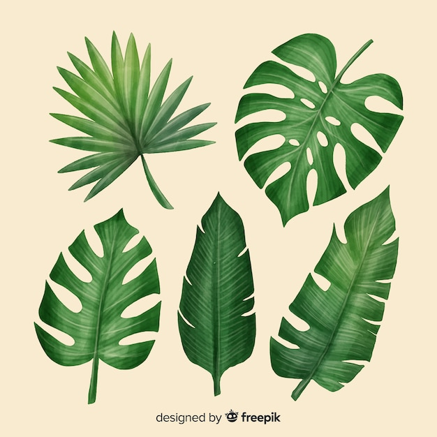 photo about Palm Leaf Printable titled Palm Leaf Vectors, Visuals and PSD information Cost-free Down load