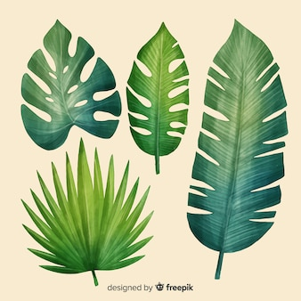Realistic tropical leaf collection