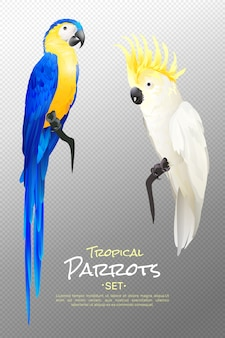 Realistic tropical parrots set