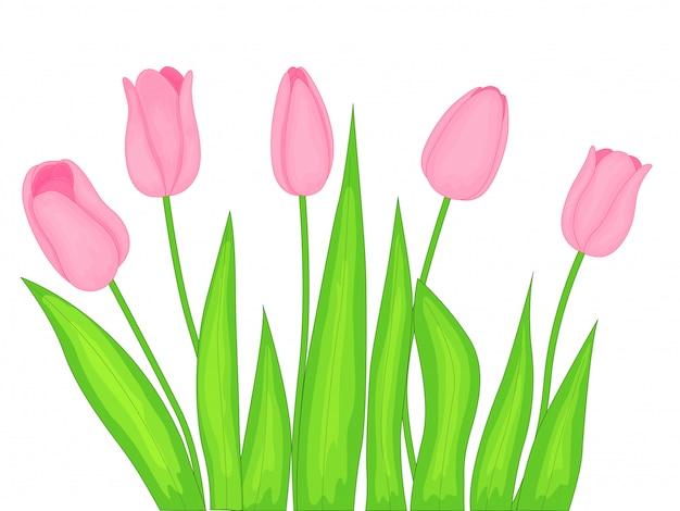 Realistic tulips set