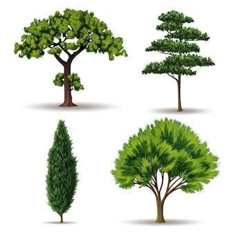 リアルなタイプの木