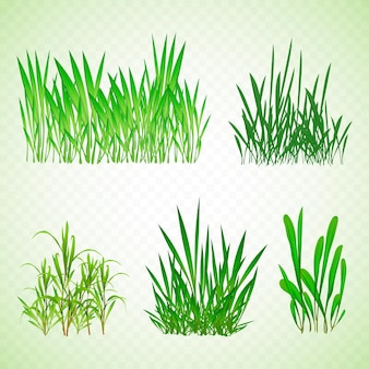 Realistic types of grass