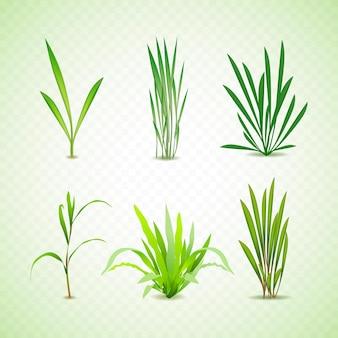 現実的な種類の草