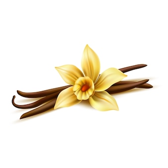 Realistic vanilla flower with dry sticks