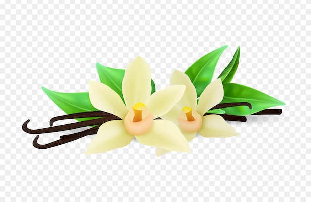現実的なバニラの花と透明な背景にスティック