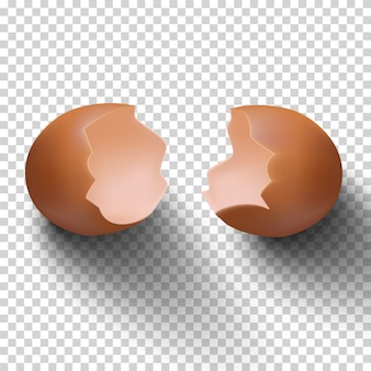 Realistic vector egg shell isolated on transparent background.m