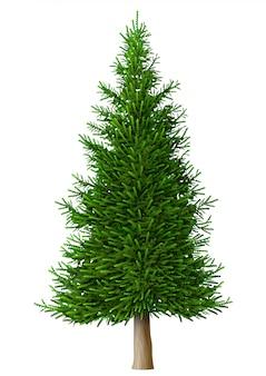 Realistic vector pine tree isolate