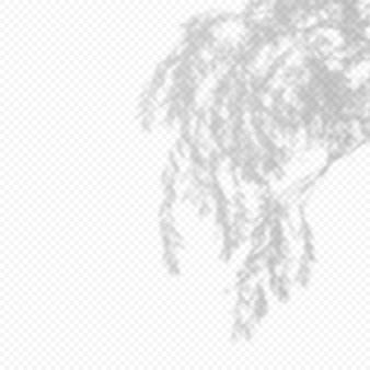 Реалистичный вектор прозрачный наложение размыли тень ветвей листьев. элемент дизайна для презентаций и макетов. эффект наложения тени дерева.