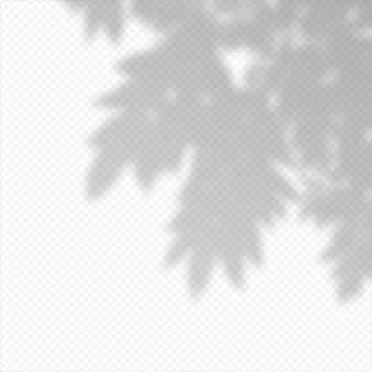 Реалистичные вектор прозрачный наложение размыли тень ветвей листьев. элемент дизайна для презентаций и макетов. эффект наложения тени дерева.