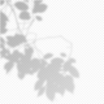 現実的なベクトルの透明なオーバーレイは、枝の葉の影をぼかしました。プレゼンテーションとモックアップのデザイン要素。ツリーシャドウのオーバーレイ効果。