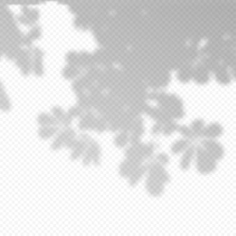 현실적인 벡터 투명 오버레이는 나뭇가지의 그림자를 흐리게 합니다. 프레젠테이션 및 모형을 위한 디자인 요소입니다. 나무 그림자의 오버레이 효과.