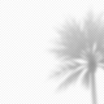 나뭇가지 야자수의 현실적인 벡터 투명 오버레이 blured 그림자. 프레젠테이션 및 모형을 위한 디자인 요소입니다. 나무 그림자의 오버레이 효과.