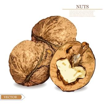 Realistic walnuts