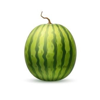 현실적인 수박 과일