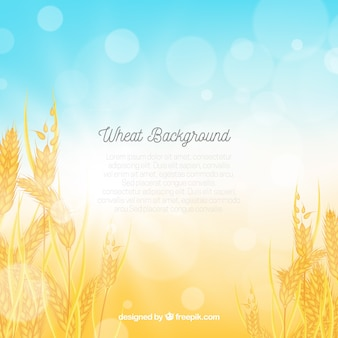 Realistic wheat background