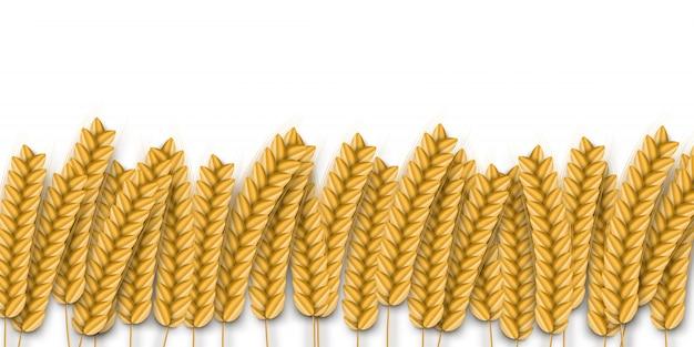 テンプレートの装飾と白い背景の上を覆う現実的な小麦の境界線。ベーカリー、有機食品、収穫の概念。