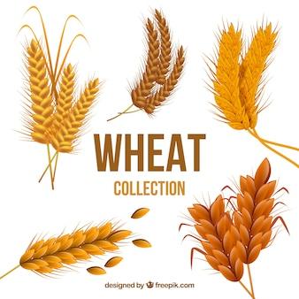 Реалистичная коллекция пшеницы