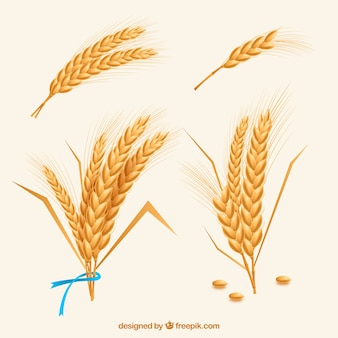 Realistic wheat collection