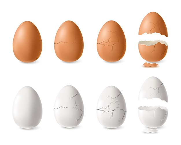 Illustrazione isolata stabilita dell'uovo incrinato e aperto bianco e marrone realistico