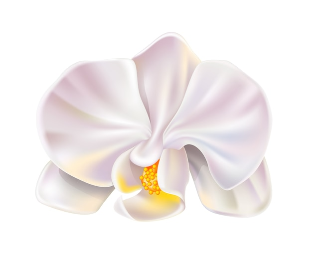 현실적인 흰 난초 꽃