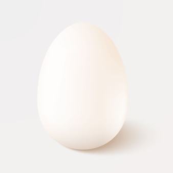 현실적인 흰색 단일 치킨 계란 흰색 배경에 고립. 주형.