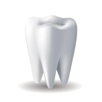 白い背景の上の現実的な白い歯。口腔病学のアイコン。リアルなイラスト。