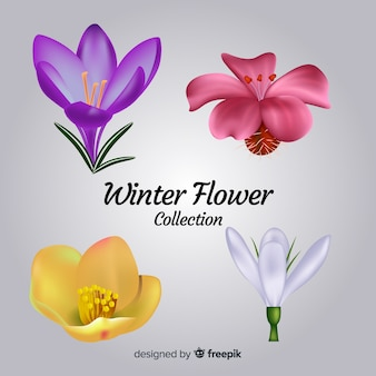 Realistic winter flower collection
