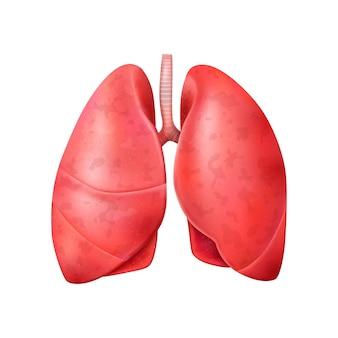 건강한 인간의 폐에 대한 고립된 삽화가 있는 현실적인 세계 폐렴의 날 구성