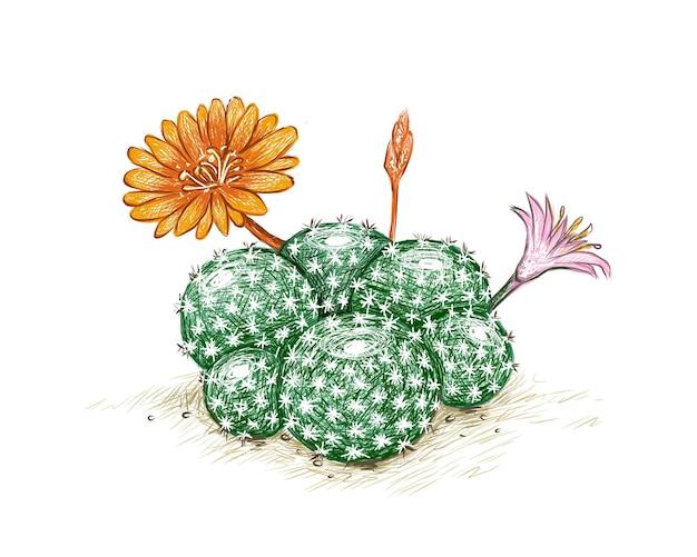 핑크와 오렌지 꽃이 있는 rebutia 선인장 정원 장식을 위한 날카로운 가시가 있는 다육 식물