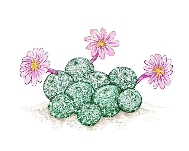 Кактус rebutia с розовым цветком суккуленты с острыми шипами для украшения сада
