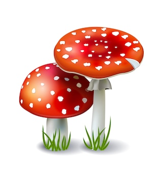 Red amanita mushrooms with grass