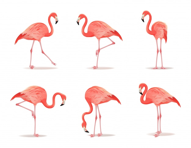 레드와 핑크 플라밍고 세트 다른 포즈 장식 디자인 요소 컬렉션에서 멋진 이국적인 조류. 흰색 배경에 플라밍고 격리