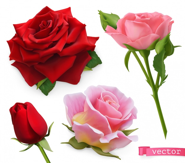 Красные и розовые розы. 3d реалистичный векторный набор