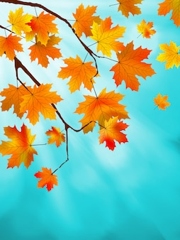 Красные и желтые листья на фоне ярко-синего неба. эффект боке. файл включен