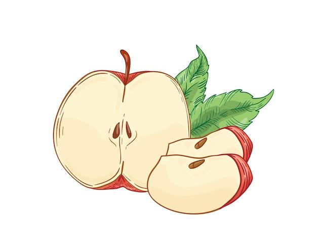 Красное яблоко ломтиками рисованной иллюстрации. половина разреза и четверти фруктов с листьями на белом. здоровое питание, эко продукт. сезон сбора урожая. натуральный витамин, сладкий ингредиент.