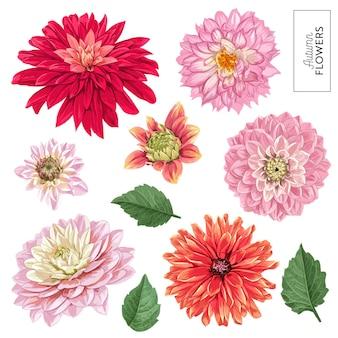 赤いアスターの花セット。装飾、パターン、招待状、壁紙のための熱帯の花の要素。熱帯植物の花の背景。ベクトルイラスト
