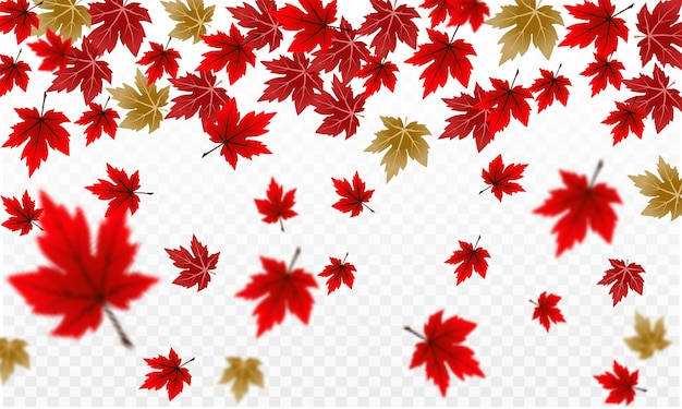 Red autumn maple foliage design on transparent