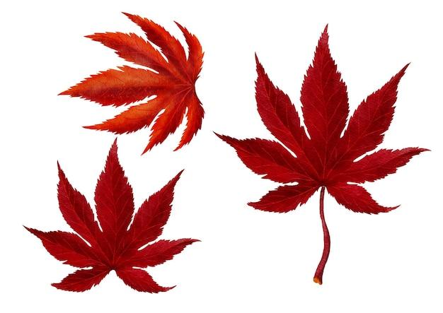 赤い秋のカエデの葉の水彩画のスタイルのベクトル