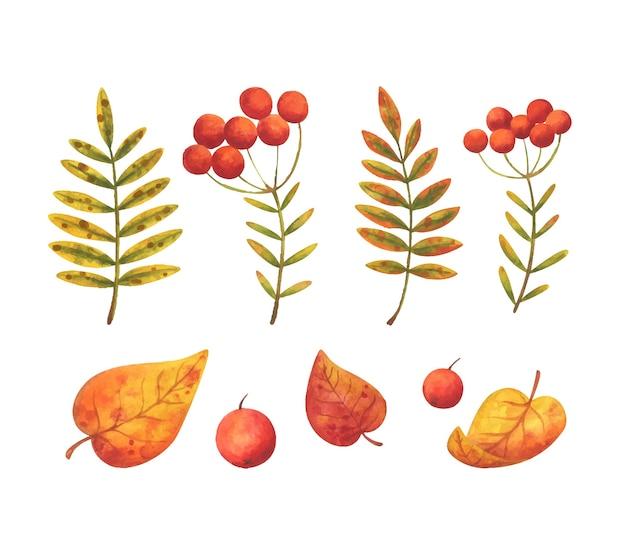 山の灰と紅葉の赤い果実。イラストのセット