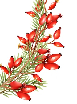 Red berries with fir tree leaves